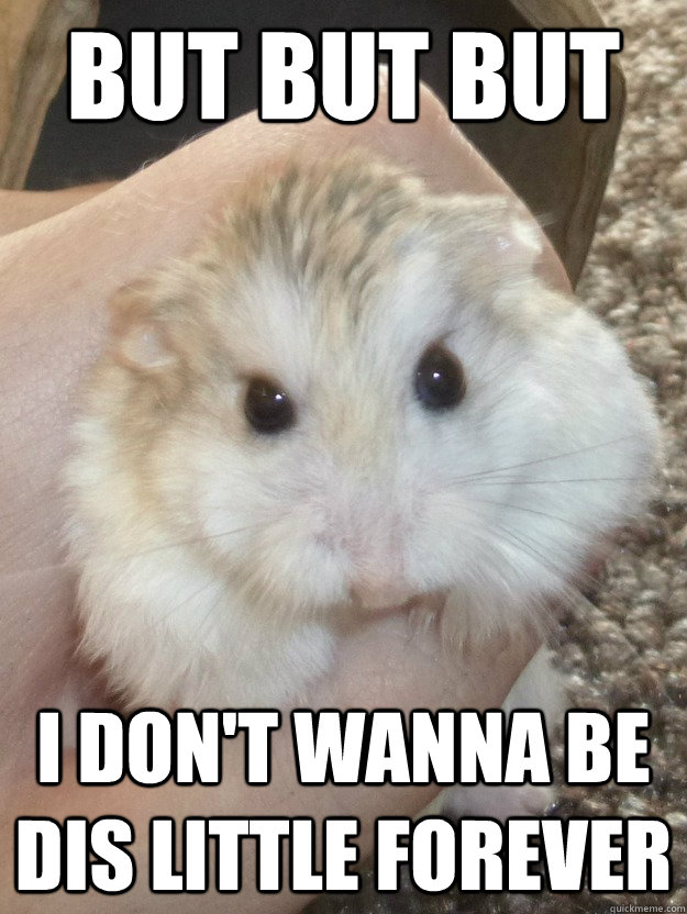 But But But I don't wanna be dis little forever  Sad Hamster