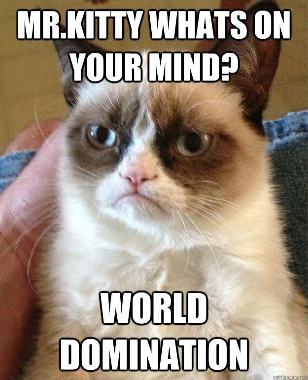 World domination is mine. - evil raccoon | Meme Generator
