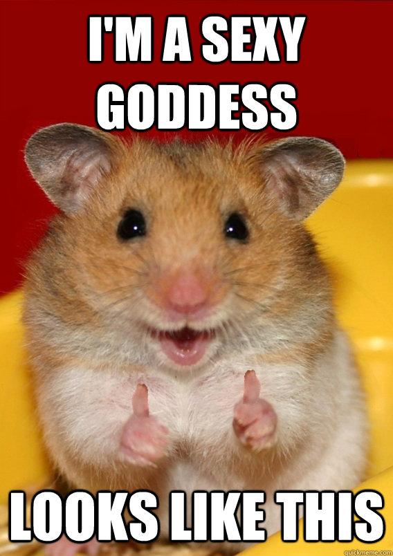 Hamster erotic