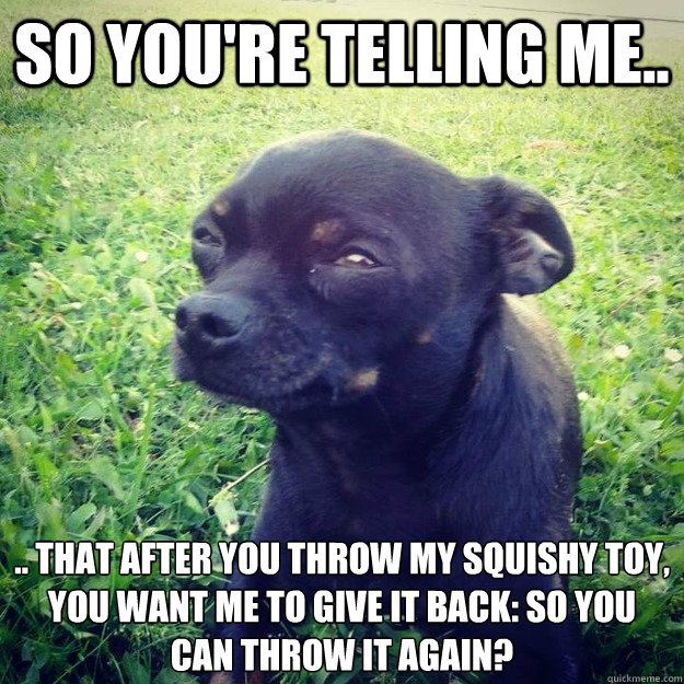 So you're telling me.. .. that after you throw my squishy toy,  you want me to give it back: so you can throw it again?   - So you're telling me.. .. that after you throw my squishy toy,  you want me to give it back: so you can throw it again?    Skeptical Dog