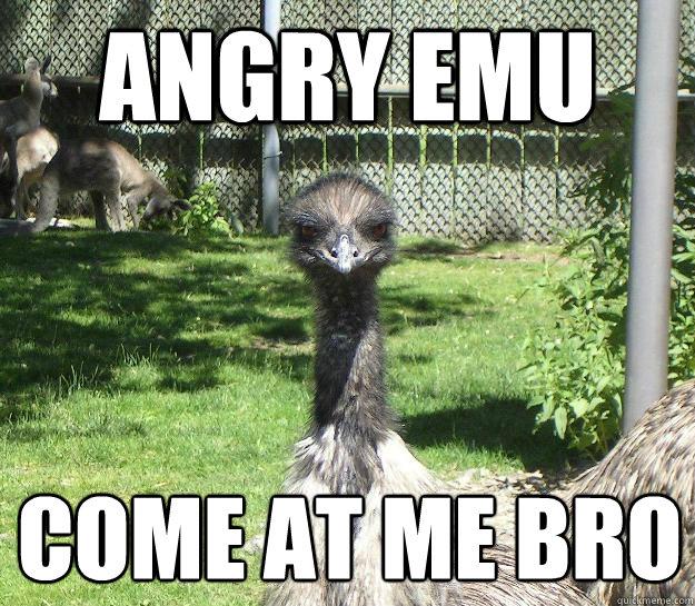 Angry Emu Come at me bro  - Angry Emu Come at me bro   Angry Emu