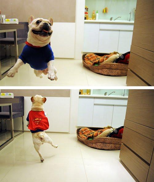 Super dog! -   Misc