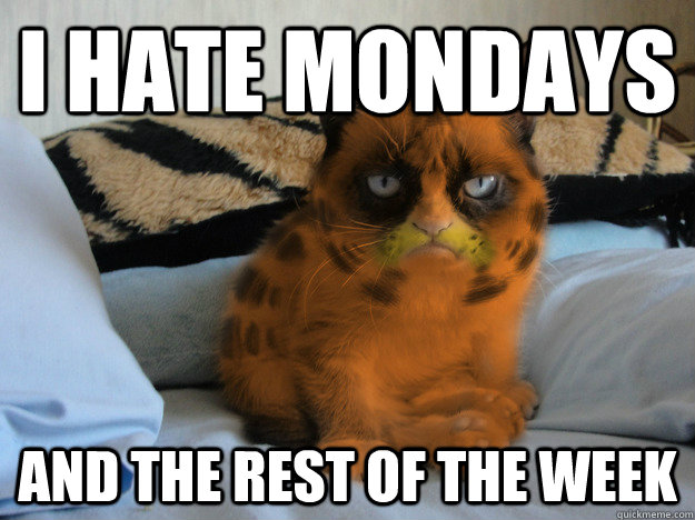 I hate mondays and the rest of the week - I hate mondays and the rest of the week  Grumpy Cat