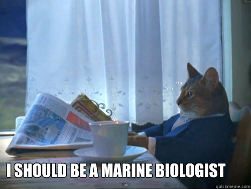 I should be a marine biologist -  I should be a marine biologist  The One Percent Cat