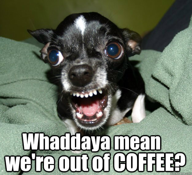 Whaddaya mean we're out of COFFEE? - Whaddaya mean we're out of COFFEE?  Chihuahua Logic