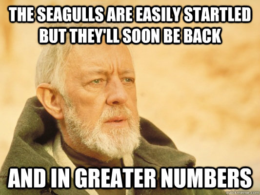 the seagulls are easily startled but they'll soon be back and in greater numbers - the seagulls are easily startled but they'll soon be back and in greater numbers  Obi Wan