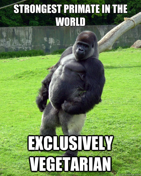 Strongest primate in the world Exclusively vegetarian