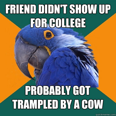 friend didn't show up for college probably got trampled by a cow - friend didn't show up for college probably got trampled by a cow  Paranoid Parrot