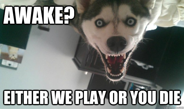 Awake? Either we play or you die  Overly Attached Dog
