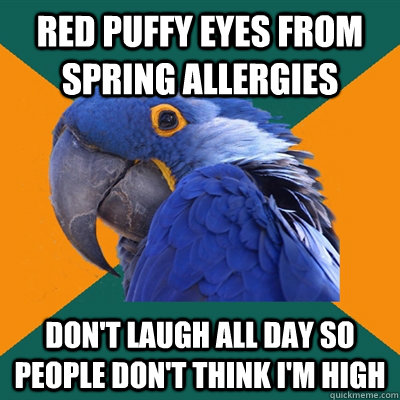 red puffy eyes from spring allergies don't laugh all day so people don't think i'm high - red puffy eyes from spring allergies don't laugh all day so people don't think i'm high  Paranoid Parrot