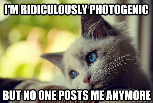 I'm Ridiculously photogenic But no one posts me anymore  First World Cat Problems