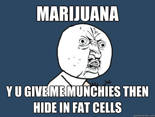 MARIJUANA y u give me munchies then hide in fat cells - MARIJUANA y u give me munchies then hide in fat cells  Y U No
