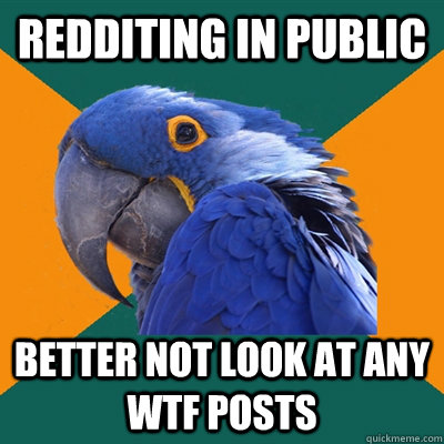 redditing in public better not look at any wtf posts - redditing in public better not look at any wtf posts  Paranoid Parrot
