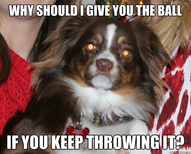 Why should I give you the ball if you keep throwing it?  Grumpy Dog