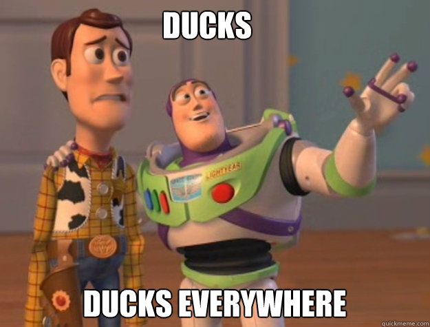 DUCKS DUCKS EVERYWHERE - DUCKS DUCKS EVERYWHERE  buzz