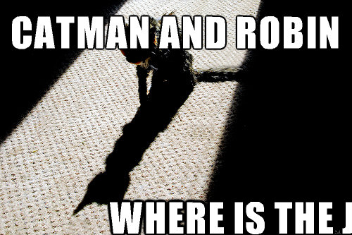 catman and robin  where is the joker