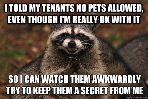 I told my tenants no pets allowed, even though i'm really ok with it so i can watch them awkwardly try to keep them a secret from me - I told my tenants no pets allowed, even though i'm really ok with it so i can watch them awkwardly try to keep them a secret from me  Insidious Racoon 2