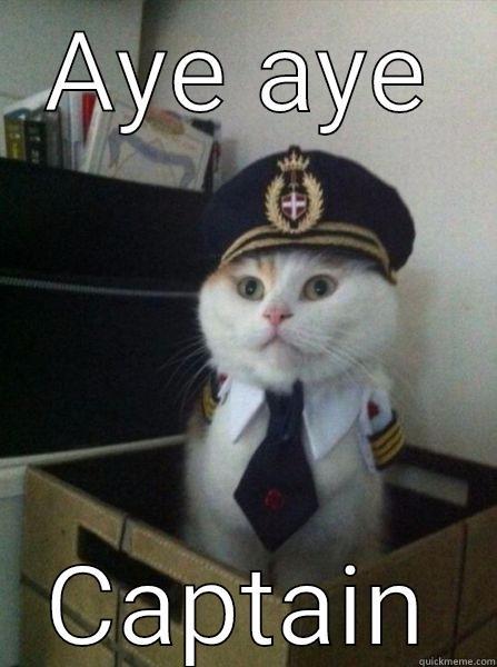 AYE AYE CAPTAIN Captain kitteh