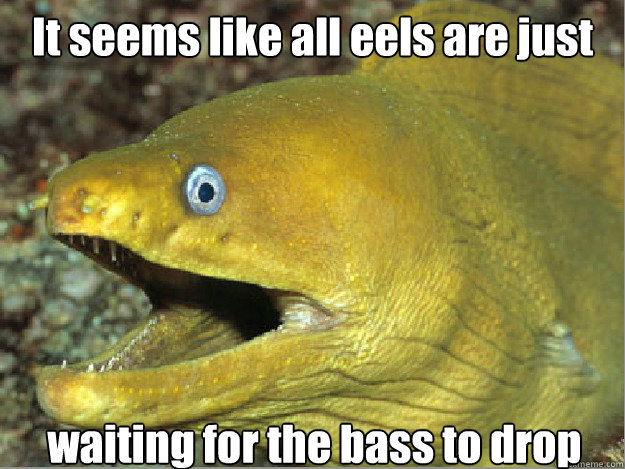 It seems like all eels are just waiting for the bass to drop