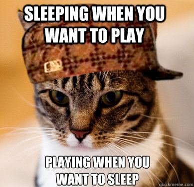 Sleeping when you want to play playing when you want to sleep  Scumbag Cat