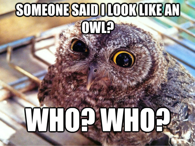 Someone said I look like an owl? WHO? WHO?  Skeptical Owl