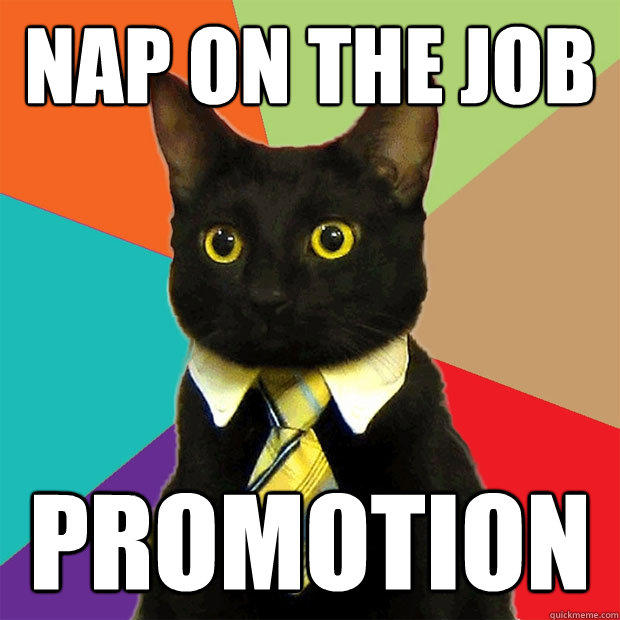 Nap on the job PROMOTION - Nap on the job PROMOTION  Business Cat