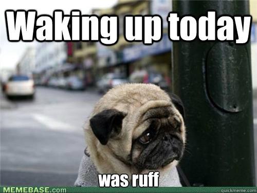 Waking up today was ruff  Sad pug is sad