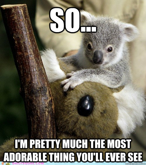 high koala meme - photo #17