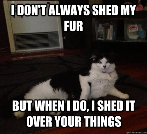 i don't always shed my fur but when i do, I shed it over your things