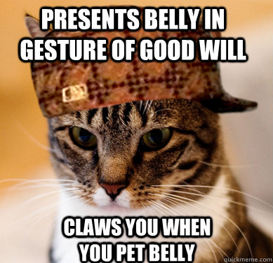 presents belly in gesture of good will claws you when you pet belly  Scumbag Cat