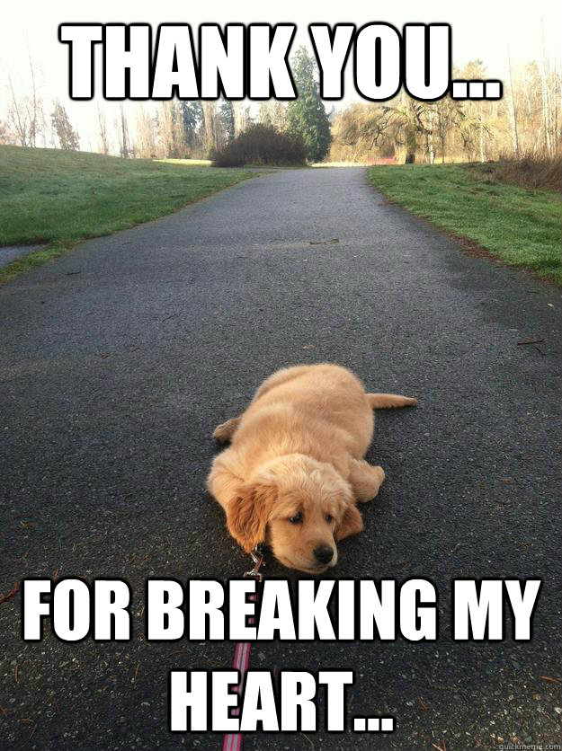 Thank you... for breaking my heart... - Thank you... for breaking my heart...  Sad Dog