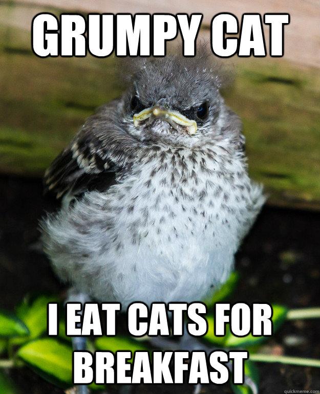 Grumpy Cat I eat cats for breakfast