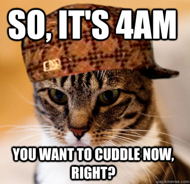 So, it's 4am You want to cuddle now, right? - So, it's 4am You want to cuddle now, right?  Scumbag Cat