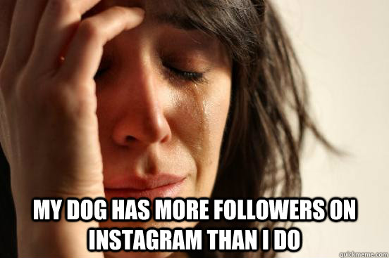My dog has more followers on Instagram than I do -  My dog has more followers on Instagram than I do  First World Problems