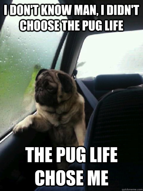 I don't know man, I didn't choose the pug life the pug life chose me - I don't know man, I didn't choose the pug life the pug life chose me  Introspective Pug