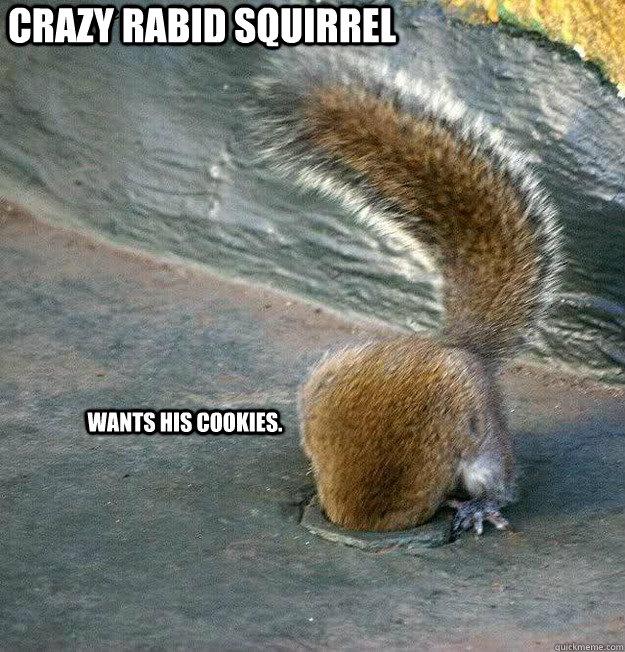 d4a5bda2562cd4dfc75c6f280fc41849f4650ae38821e71f3721a4caa26cc366 crazy rabid squirrel wants his cookies crazy squirrel quickmeme