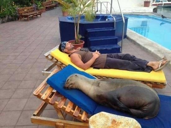 this sunbed gets my seal of approval -   Misc