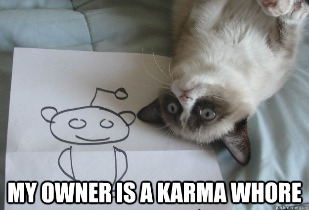 my owner is a karma whore -  my owner is a karma whore  Sudden Clarity Grumpy Cat