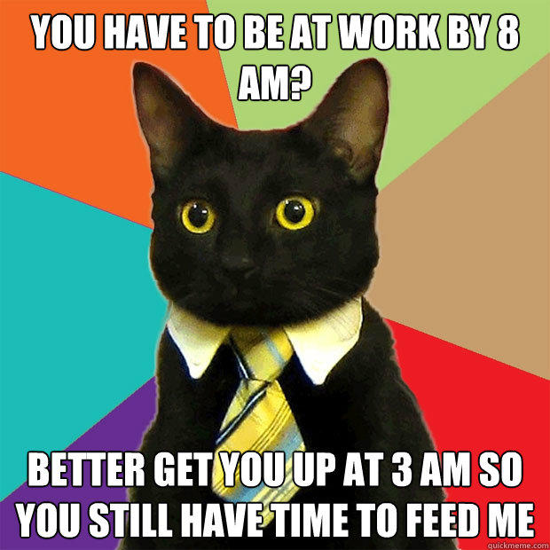 YOU HAVE TO BE AT WORK By 8 am? BETTER GET YOU UP AT 3 am so you still have time to feed me - YOU HAVE TO BE AT WORK By 8 am? BETTER GET YOU UP AT 3 am so you still have time to feed me  Business Cat
