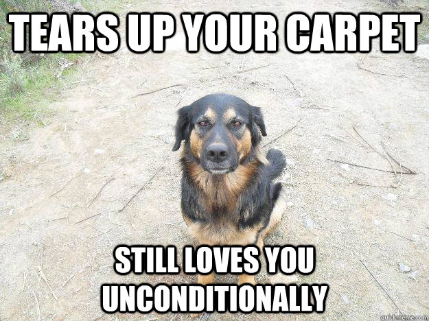 tears up your carpet still loves you unconditionally - tears up your carpet still loves you unconditionally  Good Guy Dog