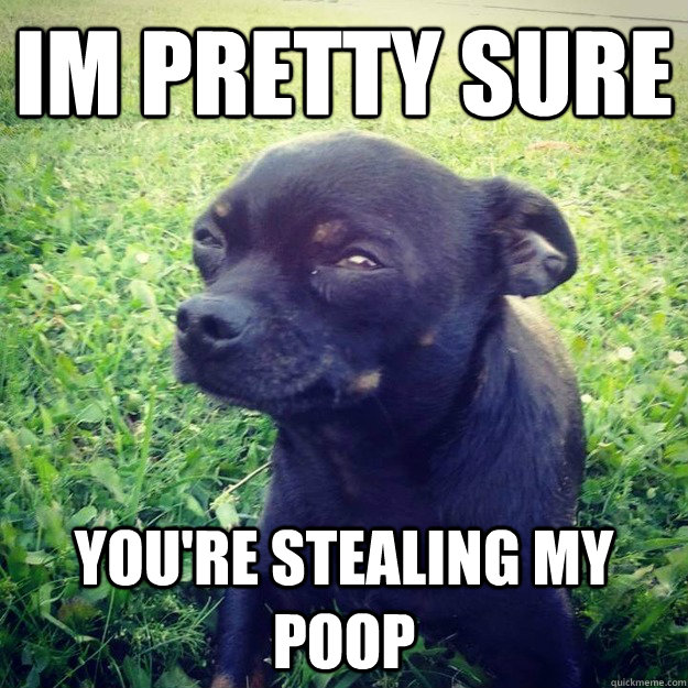 IM PRETTY SURE you're stealing my poop - IM PRETTY SURE you're stealing my poop  Skeptical Dog