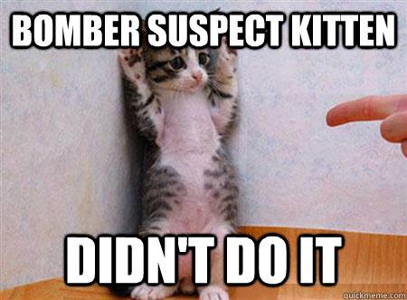 Bomber suspect kitten DIDN'T DO IT - Bomber suspect kitten DIDN'T DO IT  guilty kitten