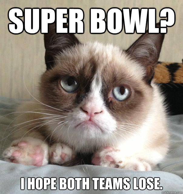 Super Bowl Super Funny Cat Pictures With Captions