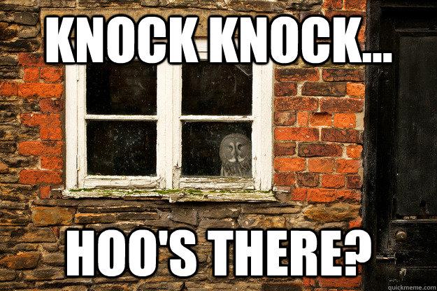 knock knock... hoo's there? - knock knock... hoo's there?  Misc