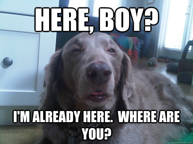 Here, boy? I'm already here.  Where are you? - Here, boy? I'm already here.  Where are you?  10 Dog