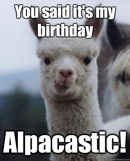 You said it's my birthday Alpacastic! - You said it's my birthday Alpacastic!  ALPACA