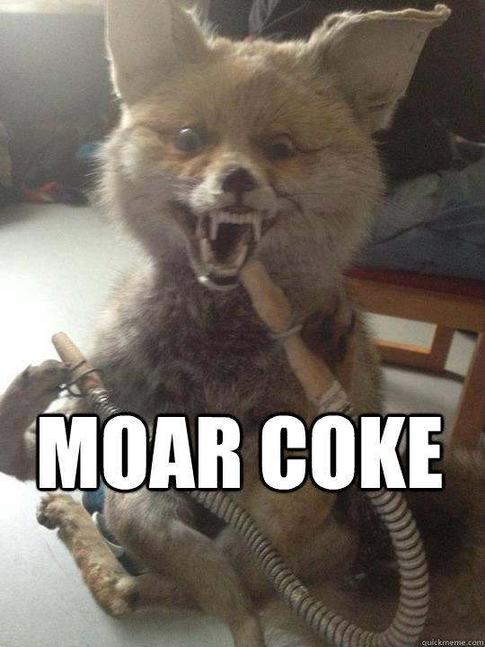 Taxidermy Fox Memes Quickmeme
