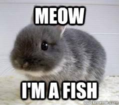 d6d31b0a7e92ac14349cc8160d0489552667c13f8f26700eafdfd38c02fc2276 meow i'm a fish bunny meme quickmeme,Meow Meme