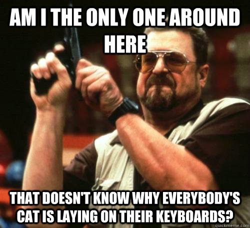 am i the only one around here That doesn't know why everybody's cat is laying on their keyboards? - am i the only one around here That doesn't know why everybody's cat is laying on their keyboards?  Misc
