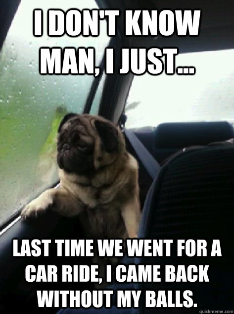 I don't know man, I just... last time we went for a car ride, I came back without my balls. - I don't know man, I just... last time we went for a car ride, I came back without my balls.  Introspective Pug